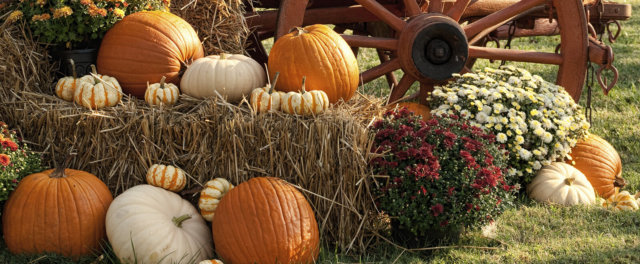 Pumpkins on hay bales with mums in front of a wagon